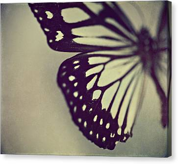 Butterflies Canvas Print - Black And White Wings by Amelia Kay Photography