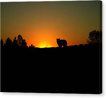 Black Bear Sunset Canvas Print