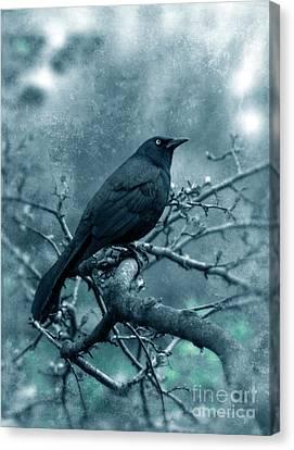 Black Bird On Branch Canvas Print by Jill Battaglia