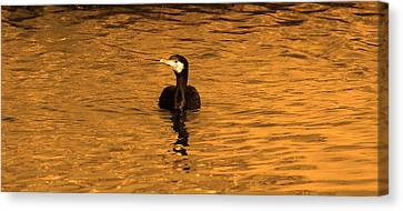 Black Bird On Surise Canvas Print by Radoslav Nedelchev
