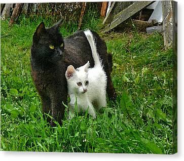 Black Cat Defends His White Kitten Canvas Print