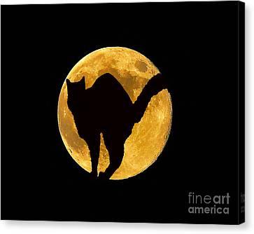 Black Cat Moon Canvas Print