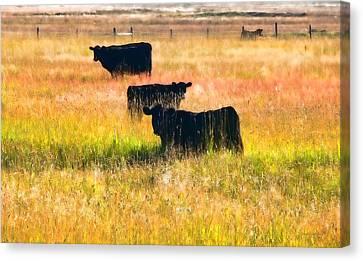 Rawhide Canvas Print - Black Cattle Golden Field by Jennie Marie Schell