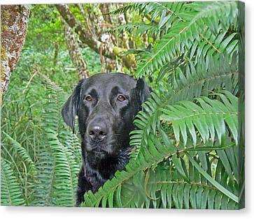 Black Dog In The Ferns Canvas Print