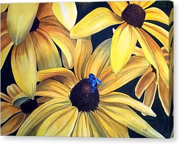 Black Eyed Susans Canvas Print by Karen Casciani
