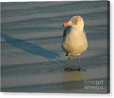 Canvas Print featuring the photograph Black Feet by Everette McMahan jr
