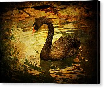 Black Goose Canvas Print