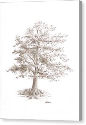 Black Oak Canvas Print