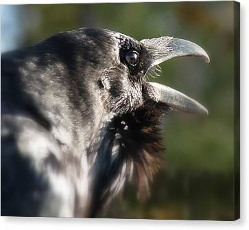 Canvas Print featuring the photograph Black Raven Talk by Cindy Wright