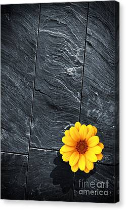 Black Schist Flower Canvas Print