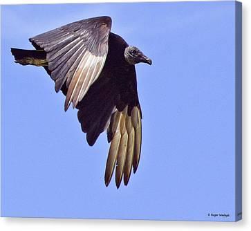Black Vulture Canvas Print by Roger Wedegis