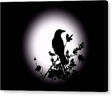 Blackbird In Silhouette  Canvas Print by David Dehner