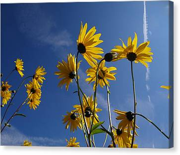 Blackeyed Susans Canvas Print by Bruce Ritchie
