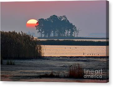 Blackwater Orb Canvas Print by Susan Isakson