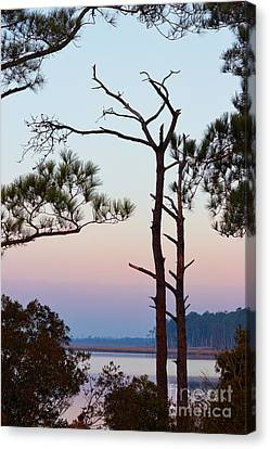 Blackwater Pines Canvas Print by Susan Isakson