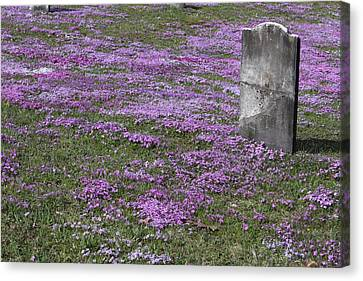 Blank Colonial Tombstone Amidst Graveyard Phlox Canvas Print by John Stephens