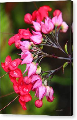 Canvas Print featuring the photograph Bleeding Hearts by Kerri Ligatich