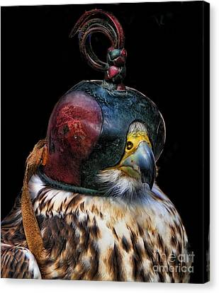Blinded Falcon Canvas Print by Alexandra Jordankova