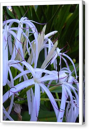Canvas Print featuring the photograph Blissfully by Frank Wickham