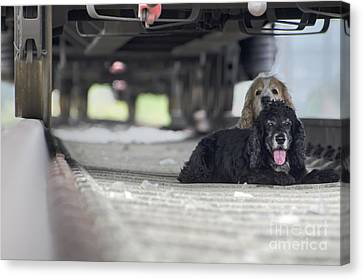 Blonde And Black Dogs Canvas Print by Mats Silvan