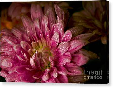 Bloom Canvas Print by David Taylor