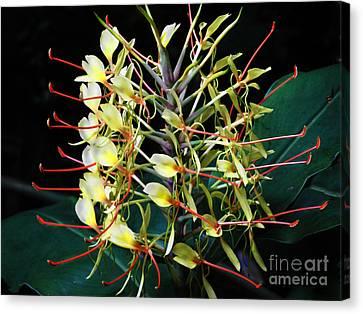 Canvas Print featuring the photograph Blooming Hawaiian Ginger by Alexandra Jordankova