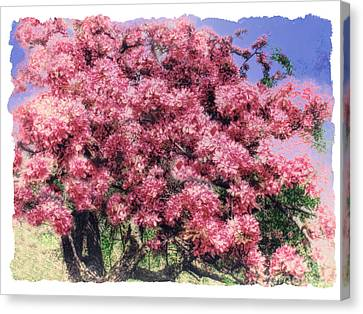 Blooming Pink Cherry Tree Canvas Print