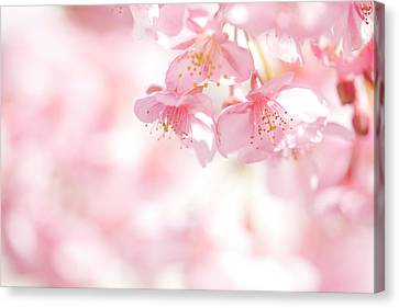 Blooming Canvas Print by Sachiko's photography