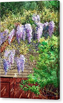 Blooming Wisteria Canvas Print by Peter Sit