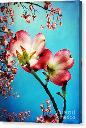 Close Focus Floral Canvas Print - Blooms Of The Dogwood by Darren Fisher