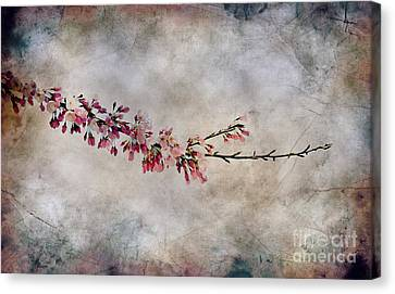 Blossom Branch Canvas Print by Elaine Manley