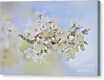 Blossom In Spring Canvas Print by Jacky Parker