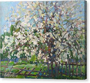 Blossoming Apple Tree Canvas Print by Juliya Zhukova
