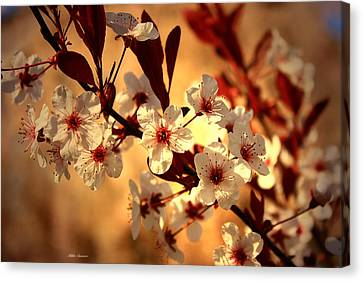Blossoms 3 Canvas Print by Mikki Cucuzzo