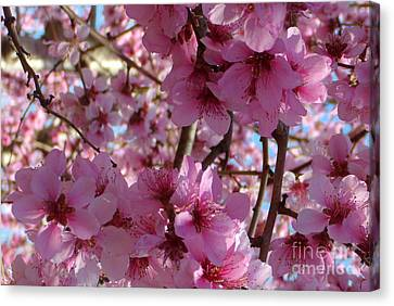 Canvas Print featuring the photograph Blossoms by Lydia Holly