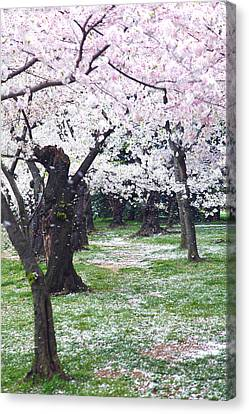 Blossoms Of The Heart Canvas Print by Mitch Cat
