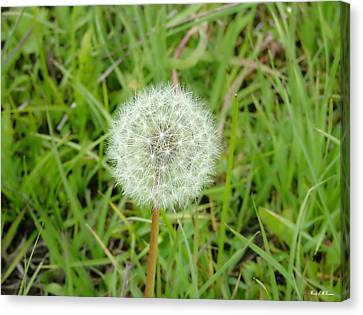 Canvas Print featuring the photograph Blow A Wish by Wendy McKennon