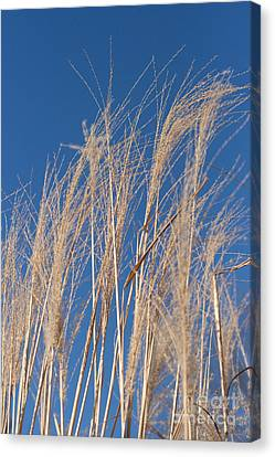 Canvas Print featuring the photograph Blowing In The Wind by Barbara McMahon