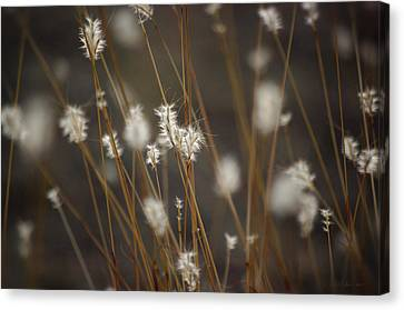 Canvas Print featuring the photograph Blowing In The Wind by Vicki Pelham