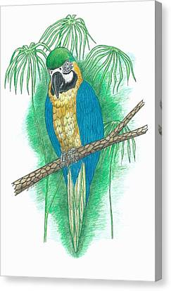 Macaw Canvas Print - Blue And Gold Macaw by Richard Freshour