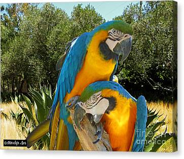 Blue And Gold Macaw Canvas Print - Blue And Gold Macaws by Methune Hively