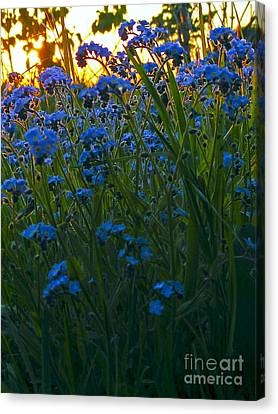 Blue And Gold Canvas Print by Trevor Fellows