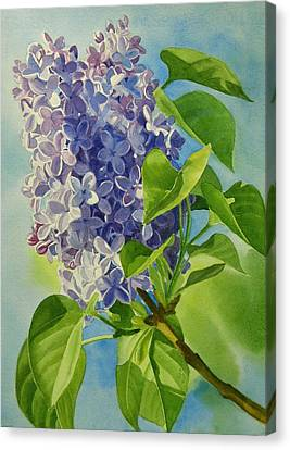 Blue And Lavender Lilacs Canvas Print by Sharon Freeman