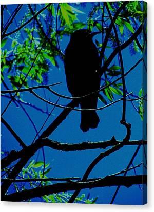 Blue-black-bird Canvas Print