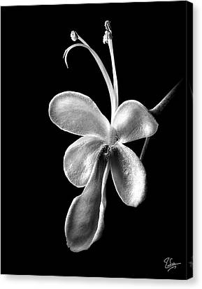 Blue Butterfly In Black And White Canvas Print by Endre Balogh