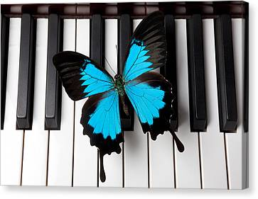 Blue Butterfly On Piano Keys Canvas Print by Garry Gay