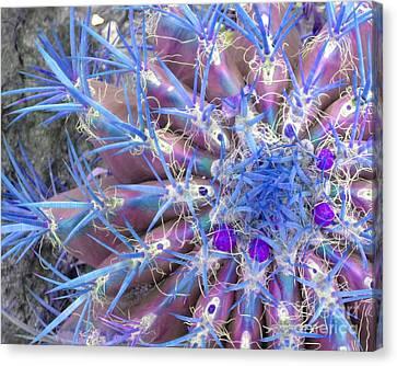 Blue Cactus Canvas Print by Rebecca Margraf