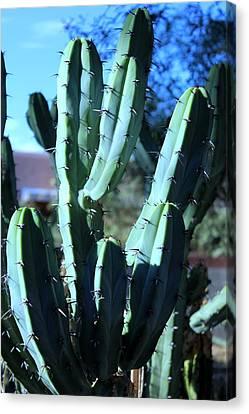 Blue Flame Cactus Canvas Print by M Diane Bonaparte