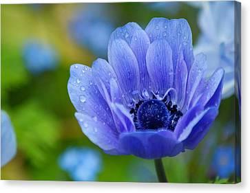Blue Flower Canvas Print by Scott Holmes