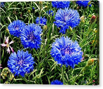 Blue Flowers Canvas Print by Luis and Paula Lopez